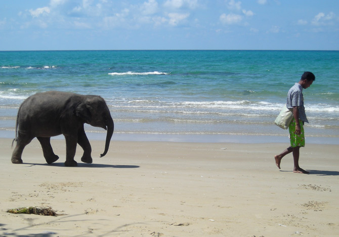 En reseguide till Thailand för elefanter och människor