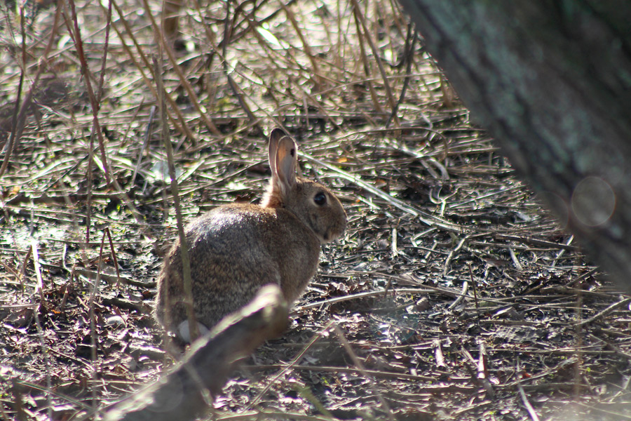 Kanin i Helsingborg gömmer sig i en buske