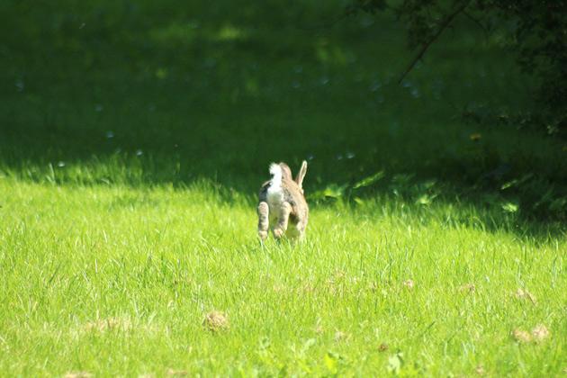 Kanin i sommaren - djufotografering