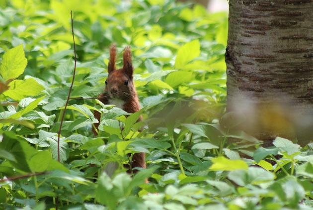Fotografering av ekorre - mitt favoritdjur
