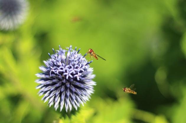 Djurfotografering av insekter som arbetar.