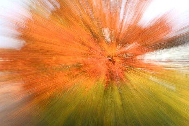 Höstbilder - höstexplosion