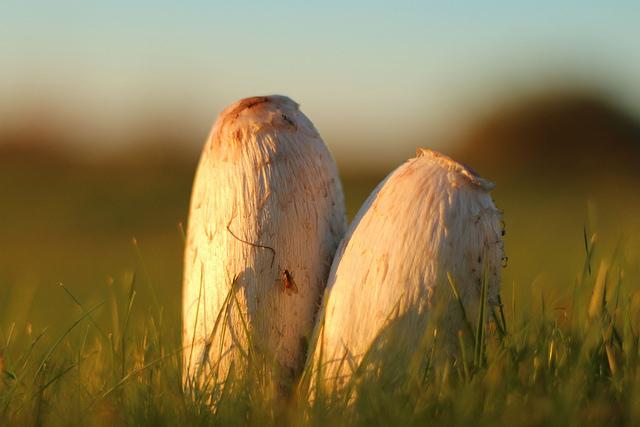 Höstbild på svampar