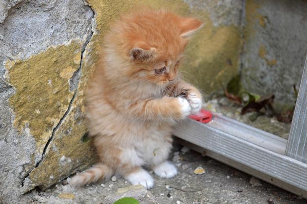 Djurfotografering av kattunge som leker.