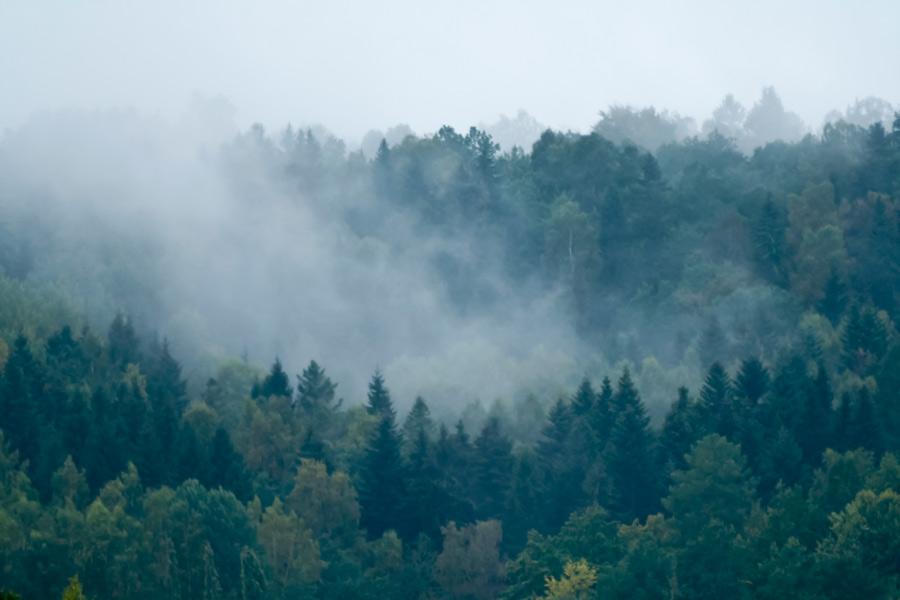 Naturfoto på dimman vid berget Billingen.