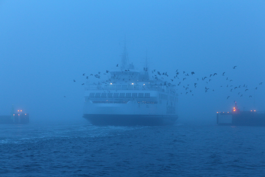 En dimmig morgon i naturen vid havet i Helsingborg