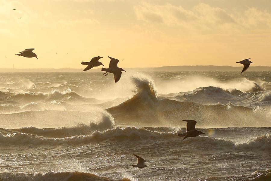 Naturfotografering av hav och fåglar