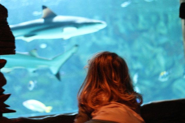 Hajar i tropikariet i Helsingborg