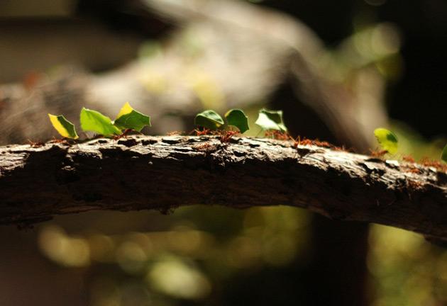 Arbetande myror på tropikariet Helsingborg