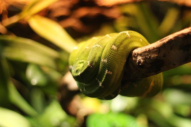 Grön orm i tropikariet i Helsingborg