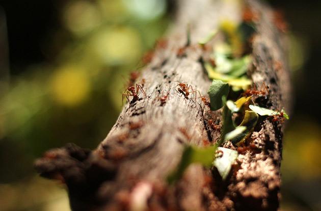 Hårt arbetande myror på tropikariet