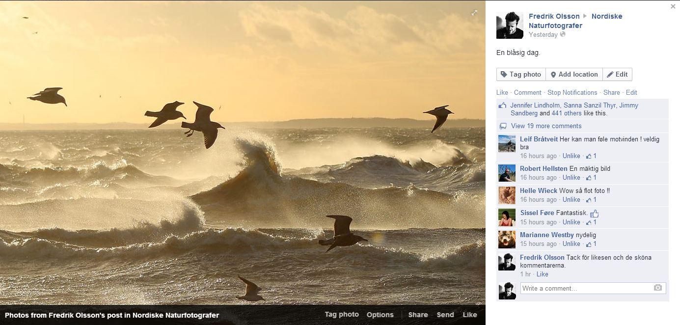 En blåsig dag - foto hos Nordiske naturfotografer