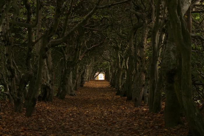 Tunneln - en halloweenbild