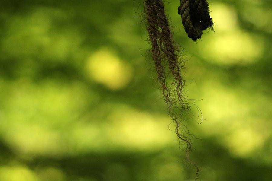 Ett rep i skogen i Helsingborg
